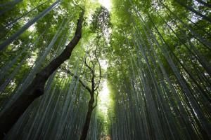 trees-suaca2